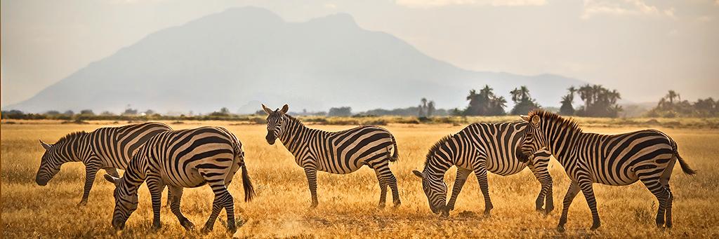 Grumeti Game Reserve