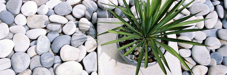 Méditation Zazen et Jardin Hiei