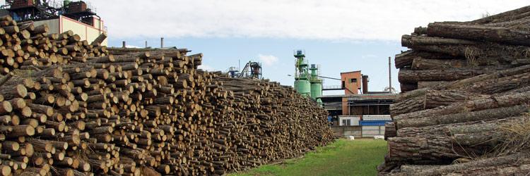 Visite de la fabrique de papier Antaimoro