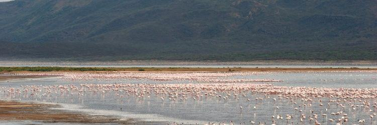 Lake Bogoria National Park