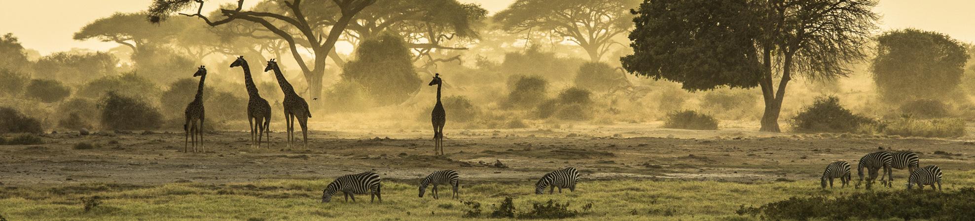 Météo d'Afrique