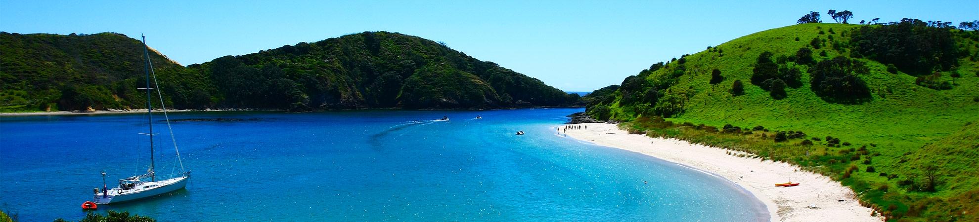 Nagez avec les dauphins dans la Baie des îles
