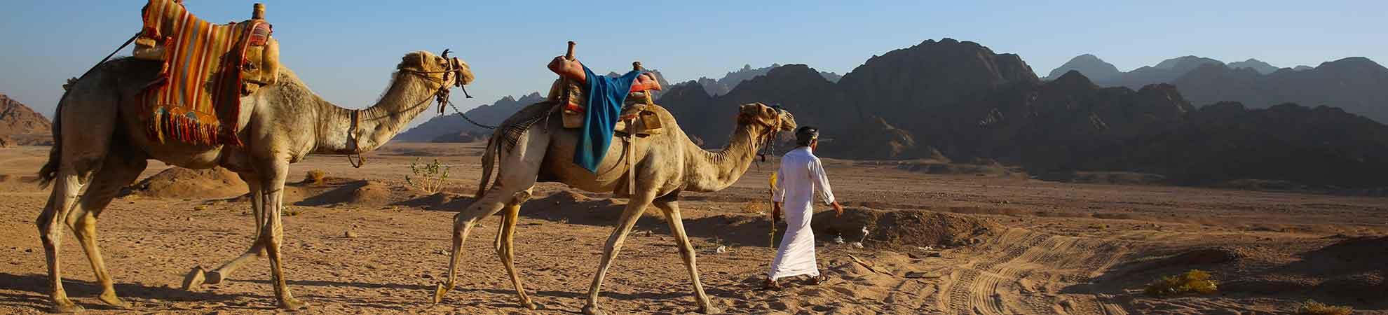 Quand partir en Égypte ?