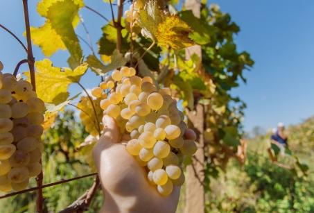 Duo passionné sur la route des vins chiliens