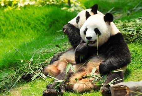 Le Sichuan, pandas et nature envoûtante
