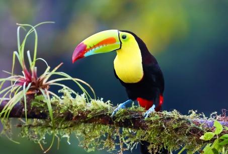 Le Costa Rica des enfants !