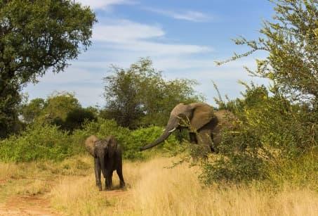 Capetown et Kruger, duo fabuleux
