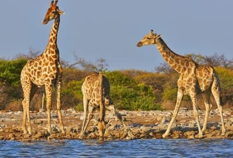 Ma famille au Kenya