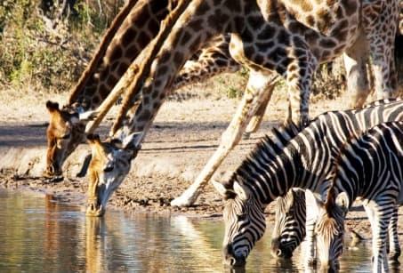 Beautés sauvages d'Afrique du Sud