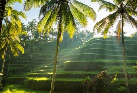 Indonésie : Bali au fil des rizières