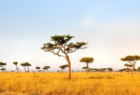 Kenya : Vertes Montagnes, Savanes ocre