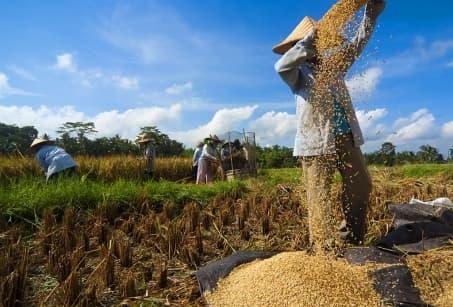 Bali entre mer et rizières