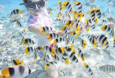 Merveilles sous-marines à Tahiti et ses îles