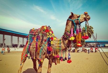 Rajasthan : Foire de Pushkar