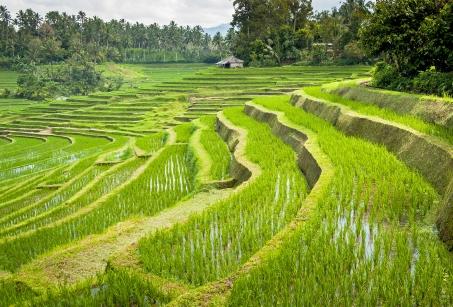 Bali hors des sentiers battus