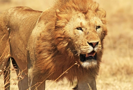 Safari et plage : du Masai Mara à l'Océan Indien