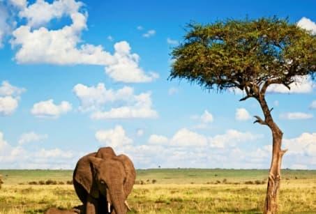 Afrique du sud : Du Cap de Bonne-Espérance aux Chutes Victoria