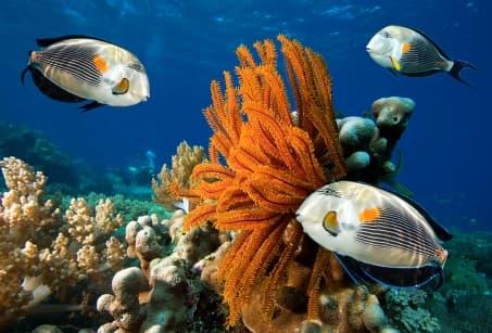 Extension : Fidji, paradis corallien