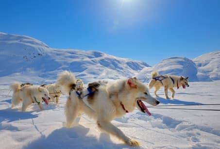 Traîneau à chiens au coeur du paradis blanc