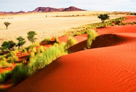 Dunes et safaris en Namibie