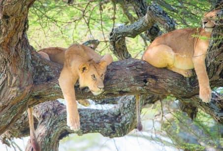 Savanes infinies de Tanzanie