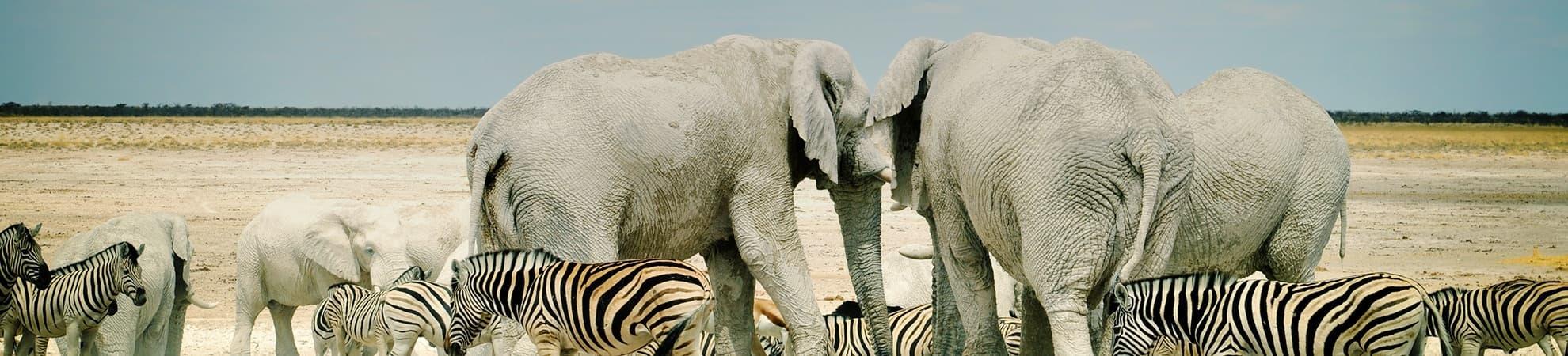 Safari & sable blanc