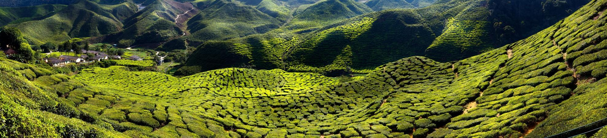 Voyage Le Sud de l'Inde