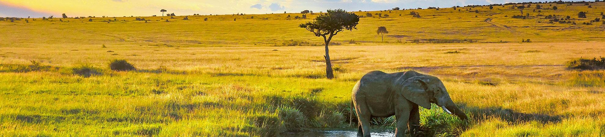 Voyage Masai Mara National Reserve
