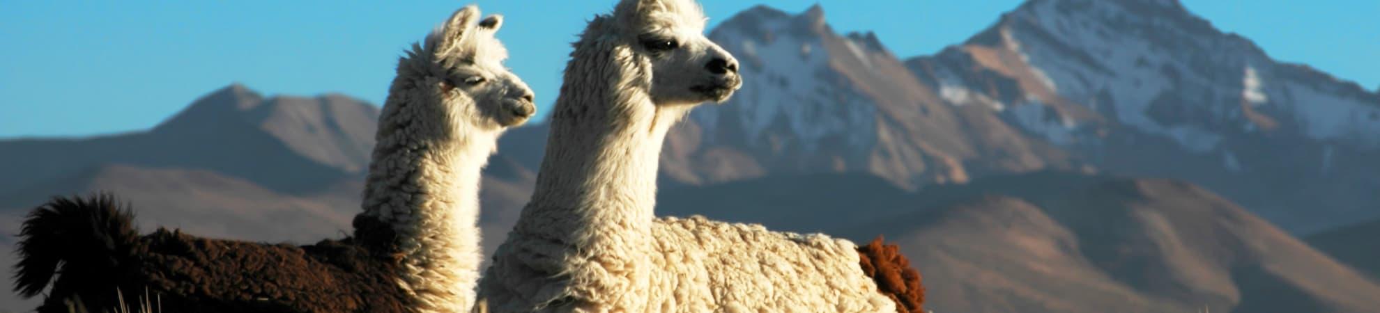 Tous nos voyages au Chili