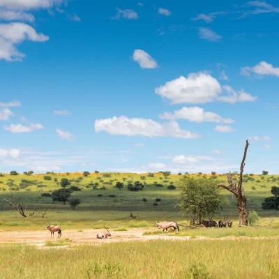 Le Désert du Kalahari