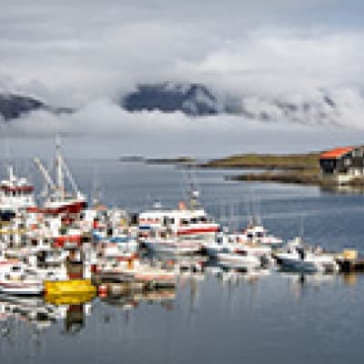 Croisière dans la baie de Breidafjördur