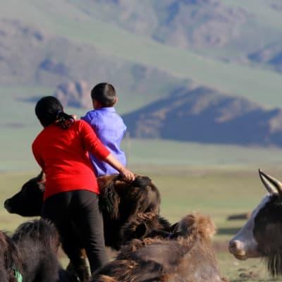 Visite d'une famille d'éleveurs de yaks