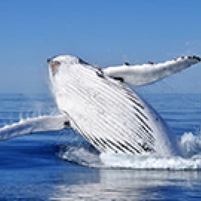 Observation des baleines à Reykjavik