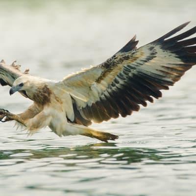 Safari Aigles Marins