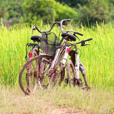 Balade à vélo à Yen Bai
