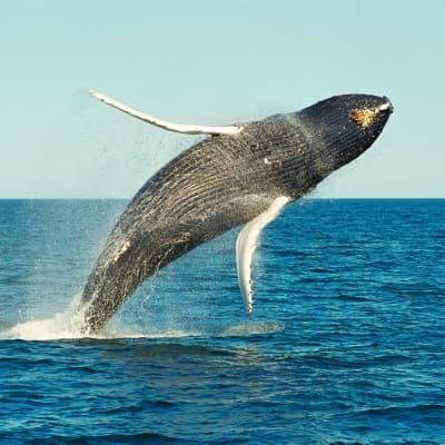 Observation des dauphins et des baleines