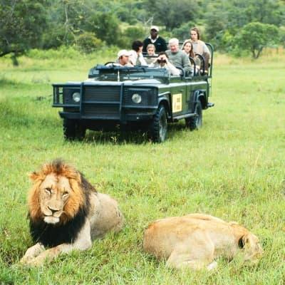 Un safari dans la réserve de Muhango