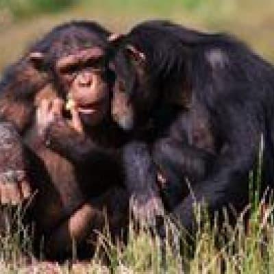 Visite de Chimpanzee Eden-Institut Jane Goodall à Nelspruit