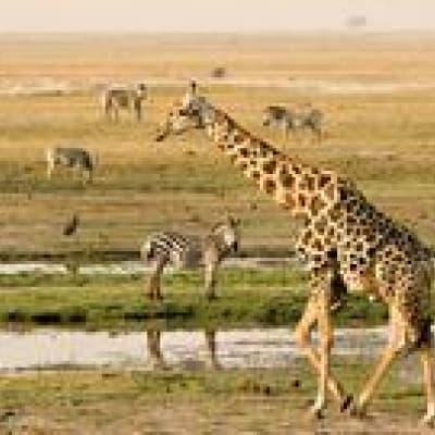 Deux activités par jour proposées par le lodge au parc Chobe