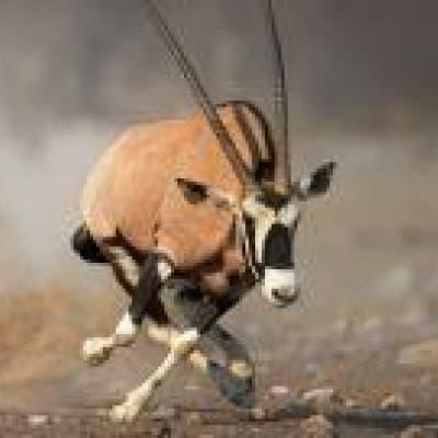 Deux activités par jour proposées par le lodge (Central Kalahari et Makgadikgadi Pans)