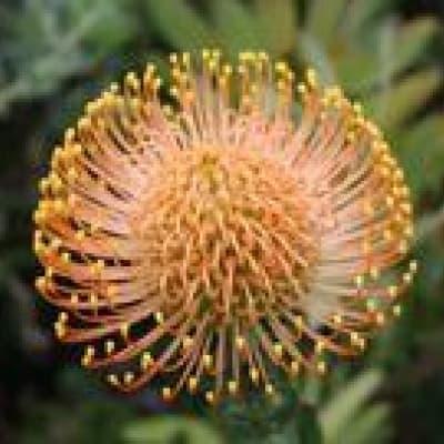 Découverte des Jardins botaniques de Kirstenbosch