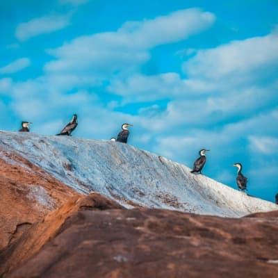Trek dans le parc naturel du Monte Gordo