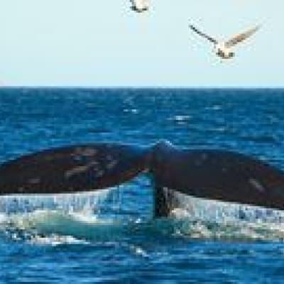 Croisière à la rencontre des baleines