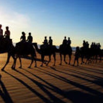 A dos de chameau au coucher du soleil
