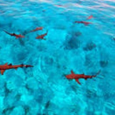 A la rencontre des requins !