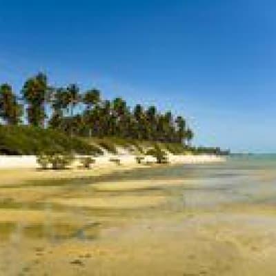 Activités sur l'île de Marajo