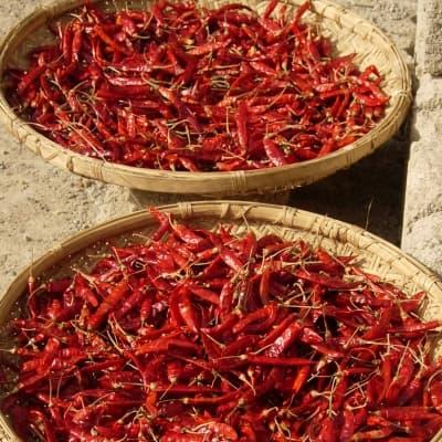 Visite du jardin d'épices + cours de cuisine