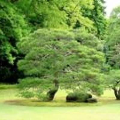 Le parc Hallim à Jeju