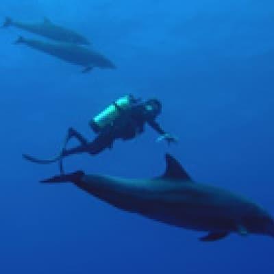Le Moorea Dolphin Center