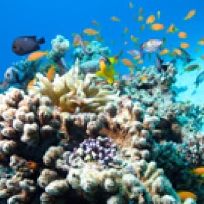 Tour ecologique du récif corallien